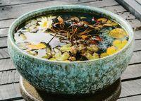 日本製 信楽焼の水鉢・メダカ鉢・すいれん鉢・睡蓮鉢・水蓮鉢・めだか鉢が全品20%引きからの激安で通販