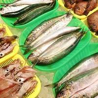 今が旬 とれとれお魚セット 5000円コース (2-3人前)