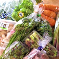 春中ハンドプログラム&氷見野菜セット