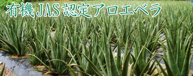 有機栽培アロエベラ畑
