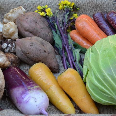 ■富士山麓野菜・厳選おまかせ野菜セット(3月に1回発送)