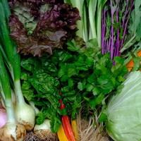 ■富士山麓野菜・厳選おまかせ野菜セット(4月に2回発送)