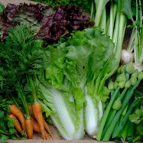 ■富士山麓野菜・厳選おまかせ野菜セット(5月に2回発送)