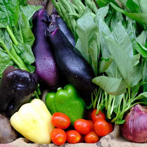 ■富士山麓野菜・厳選おまかせ野菜セット(8月に2回発送)
