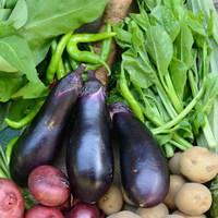 ■富士山麓野菜・厳選おまかせ野菜セット(10月に1回発送)