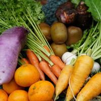 ■富士山麓野菜・厳選おまかせ野菜セット(12月に1回発送)
