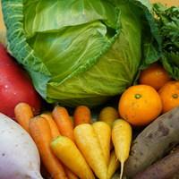 ■富士山麓野菜・厳選おまかせ野菜セット(1月に1回発送)