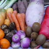 ■富士山麓野菜・厳選おまかせ野菜セット(2月に1回発送)