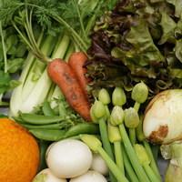 ■富士山麓野菜・厳選おまかせ野菜セット(5月に1回発送)