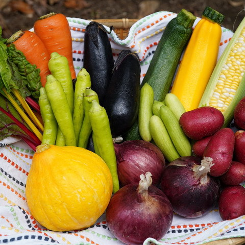 ■富士山麓野菜・厳選おまかせ野菜セット(7月に1回発送)