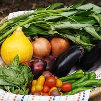 ■富士山麓野菜・厳選おまかせ野菜セット(8月に1回発送)