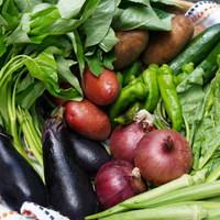 ■富士山麓野菜・厳選おまかせ野菜セット(9月に1回発送)