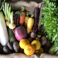 ■オトワファーム・旬の野菜セット(12月に1回発送)