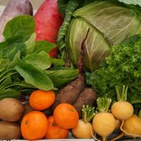 ■オトワファーム・旬の野菜セット(2月に1回発送)