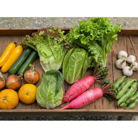 ■オトワファーム・旬の野菜セット(6月に2回発送)