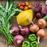 ■オトワファーム・旬の野菜セット(8月に1回発送)