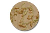 発芽発酵玄米