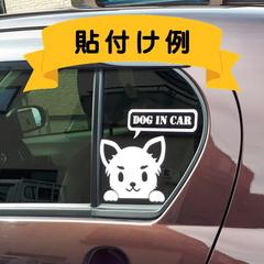 のぞき見犬例:チワワ