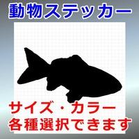金魚:ワキン