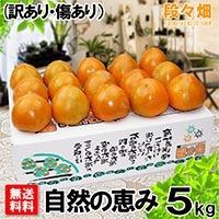 愛媛県産 富士柿 自然の恵み5kg(傷あり・訳あり)