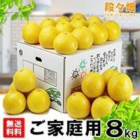 愛媛県産 ジューシーオレンジ ご家庭用8kg