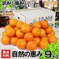愛媛県産 みやうちいよかん 自然の恵み(訳あり・傷あり)9kg