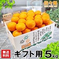 愛媛県産 ポンカン ギフト用 5kg