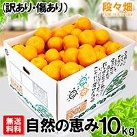 愛媛県産 ポンカン自然の恵(訳あり・傷あり)10kg