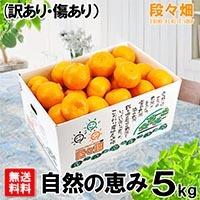 愛媛県産 ポンカン自然の恵(訳あり・傷あり) 5kg
