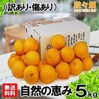 愛媛県産 デコスケ 自然の恵み 5kg