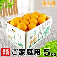 愛媛県産 清見(きよみ)ご家庭用 5kg